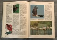 The Kingfisher Illustrated Encyclopedia of Animals (54)