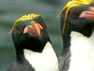 BENO Macaroni Penguin