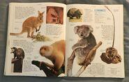 DK Encyclopedia Of Animals (112)