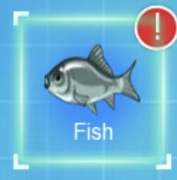 IMG dc fish.jpeg