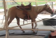 Kalahari Resorts Horse