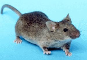 Codename: Mice Next Door