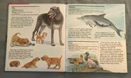 My First Book of Animals from A to Z (7)