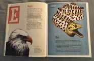 The Dictionary of Ordinary Extraordinary Animals (13)