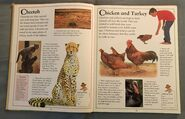 The Kingfisher First Animal Encyclopedia (15)