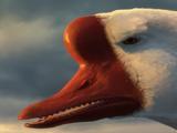 Golden Goose (Shrek)