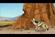 Aardwolf (Wild Kratts)