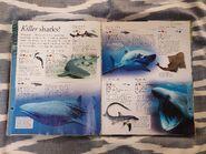Animals a Children's Encyclopedia (90)