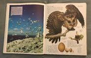 DK Encyclopedia Of Animals (48)
