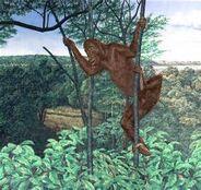 Sivapithecus