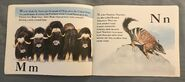 The Furry Animal Alphabet Book (8)