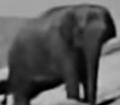 AMC Wagons Elephant