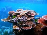 Coralsdfg