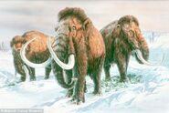 Dailymail Mammoths