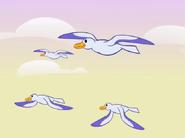 HTF Seagulls