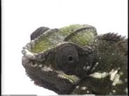 Henry's Amazing Animals Chameleon