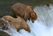 MMHM Grizzly Bears