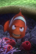 Marlin is angry