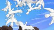 TLK2 Egrets