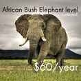 $60 Dollars Per Year for African Bush Elephants