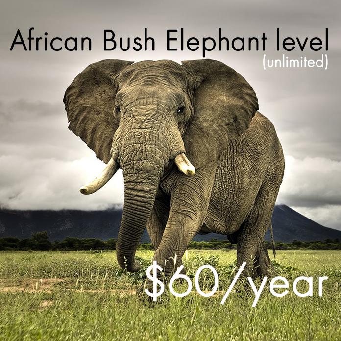 $60 Dollars Per Year for African Bush Elephants.jpg