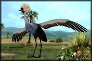 Afrika Crowned crane
