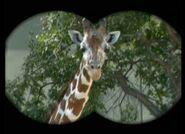 B&F Giraffe