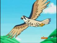 Go Diego Go Falcon