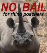 No Bail for Rhinoceros and Elephant Poachers