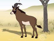 Rileys Adventures Roan Antelope