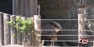 San Antonio Zoo Ostrich