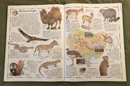 The Animal Atlas (19)