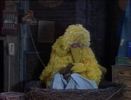 Big Bird Sleeping.JPG