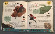 Bug Dictionary (12)