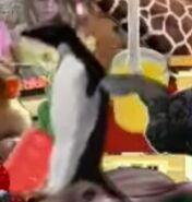 Cookoo Concertos Penguin