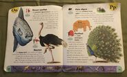 Extreme Animals Dictionary (17)