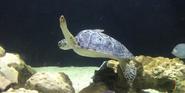 Houston Zoo Sea Turtle