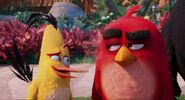 Red and Chuck (Angry Birds)