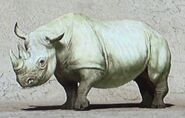 South Central Black Rhinoceros ZTX