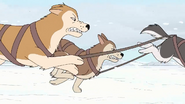 WBB Huskies