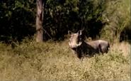 WWPB Warthog