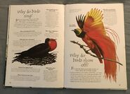 Birds (Over 100 Questions and Answers to Things You Want to Know) (6)