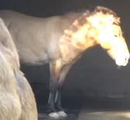 Cincinnati Zoo Horse