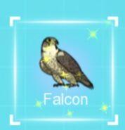 IMG dc falcon