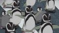 JEL Magellanic Penguins