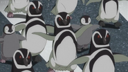 JEL Magellanic Penguins