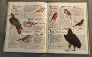 Macmillan Animal Encyclopedia for Children (21)