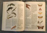 The Kingfisher Illustrated Encyclopedia of Animals (106)