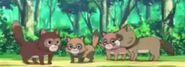 Yo-Kai Watch Raccoons