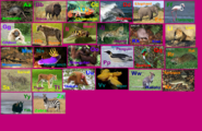 Animal Alphabet 1